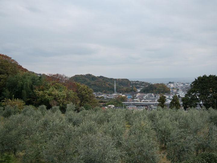 浜田さんのオリーブ畑